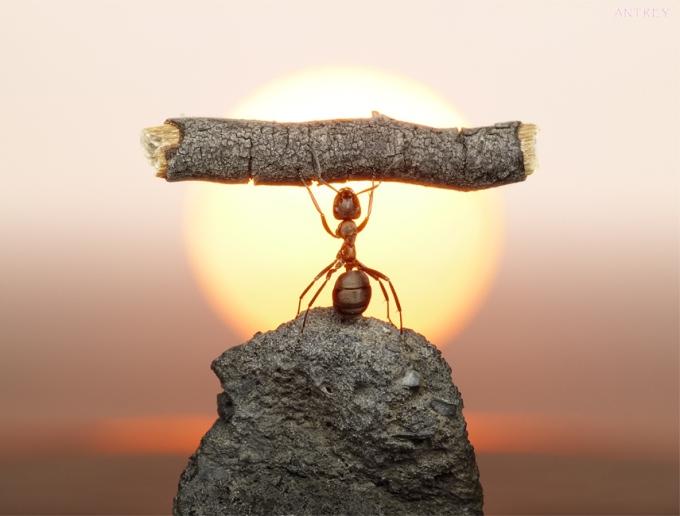 combattere-le-formiche