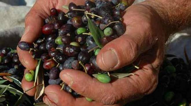 olive-taggiasche-78203.660x368