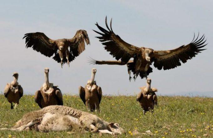 avvoltoi-720x468