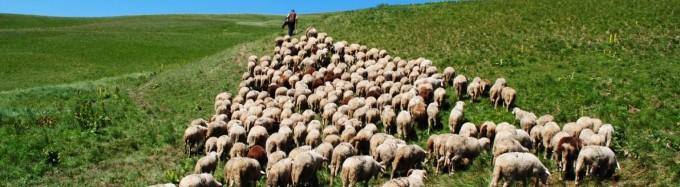 follow-shepherd