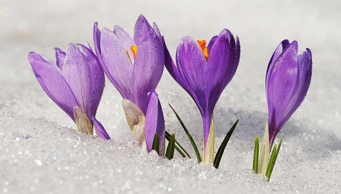 piante-che-fioriscono-in-inverno-it-000